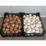 Купим грибы свежие и консервированные, Маринованные
