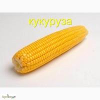 Семена кукурузы Солонянский 298 СВ