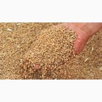 Продам зерно. Пшеница