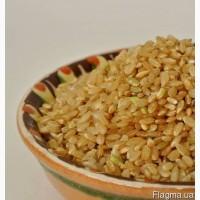 Рис бурый нешлифованный оптом от 24 грн/кг