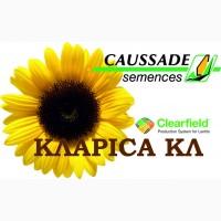 Семена Clearfield подсолнечника Кларисса КЛ (Klarika CL), Коссад Семанс (Caussade-Semences