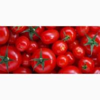 Куплю помидор оптом от 20т