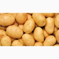 Покупаем домашний картофель с доставкой