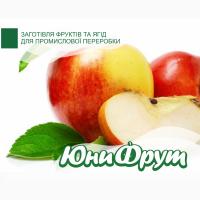Куплю яблоки оптом от 20т на переработку