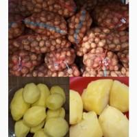 Продам картофель белороса гранада ревьера с доставкой