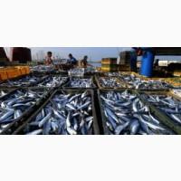 Ищу производителей рыбной продукциии