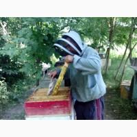 Продам Бджолосімї