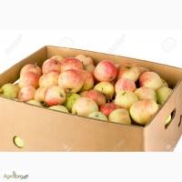 Лоток для винограда, сливы, персиков, абрикосы, тара для фрукты
