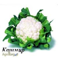 Продам семена Капуста цветная Кашмир F1