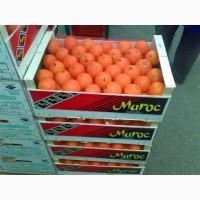 Продам мандарины Марокканские