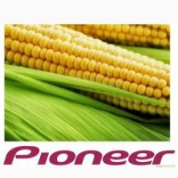 Семена кукурузы Pioneer различных гибридов, Черкасская обл
