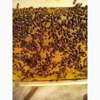 Пропоную бджолопакети 2021
