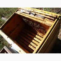 Продажа бджіл