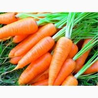 Продается морковь оптом