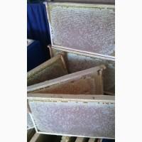 Мёд.Сотовый мёд.Натуральный.Вызревший нектар лечебных трав заповедника