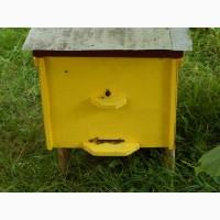 Продам бджолопакети та бджолосім#039;ї