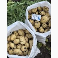Ранний молодой картофель Украина Херсон
