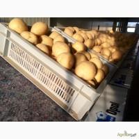 Продаю насіннєву картоплю Якість