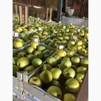 Продам яблуко 1 та 2 сорту оптом.Яблуко гарно зберігається