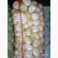 Продажа лука чищенного оптом и крупным оптом