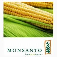 Семена кукурузы Monsanto различных гибридов, Черкасская обл
