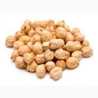 Продаем семена нута Иордан