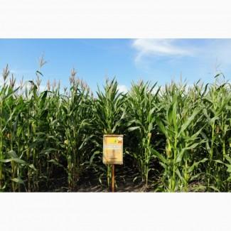 Семена кукурузы ДН Пивиха ФАО –180