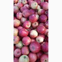 Продам яблука опт з холодильникп