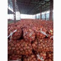 Экспортируем лук из Узбекистана