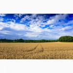 Продам земельный участок сельхозназначения в Донецкой области