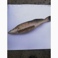 Свежая рыба. Густера, плотва, судак, лещ, окунь и др