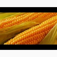 Закупаем кукурузу.Новый урожай 2020 года.Вся Украина