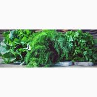 Продажа зелени в ассортименте, оптом
