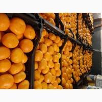Продам мандарины из Абхазии