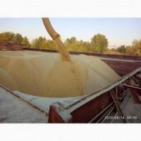 Закупаем отруби пшеничные
