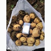 Продам картофель. ОПТ. КАЧЕСТВО