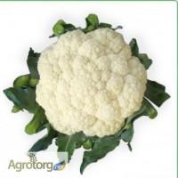 Семена цветной капусты VANZA F1 / ВАНЗА F1 (Китано)