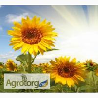 Продам семена подсолнечника Голдсан, Тунка, Мегасан, ЛГ 5485, ЛГ 5580, ЛГ 5662