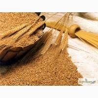 Насіння озимої пшениці європейської селекції