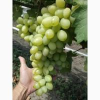 Продам виноград столовый свежий