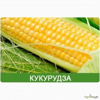 Продам гібрид кукурузи ПОЧАЇВСЬКИЙ 190 МВ