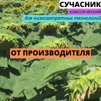 Семена подсолнечника гибрид Сучасник F1