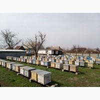 Продам пчелосемьи, пчел, бджолосімї, бджоли