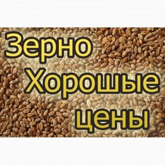Компанія на постійній основі закуповує протравлену(червону) кукурудзу