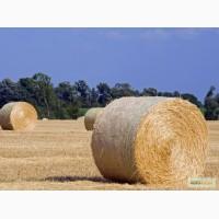 Куплю солому пшеничну
