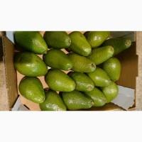 Овочі фрукти з Іспанії оптом