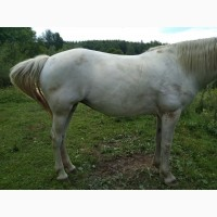 Продам кобилу і молодого коня