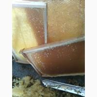 Забрусовый Мёд. Скачанный с восковых крышечек. Лизоцим. Лечебные травы
