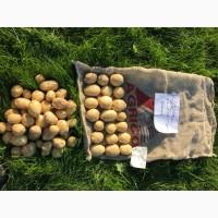 Волинська картопля. Продам якісне насіння картоплі вітчизняної та європейської селекції