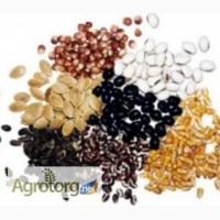 Продам насіння оптом та в роздріб пакетоване та вагове